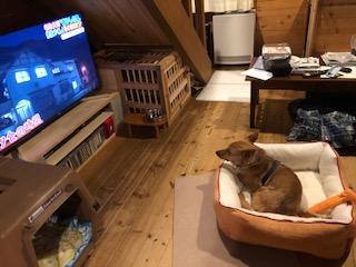 テレビだって見ちゃいます