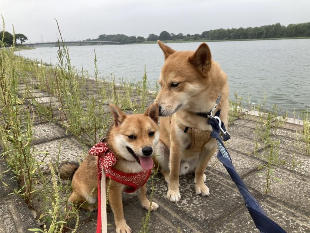 お散歩では「親子ですか?」とよく聞かれるとか、、、